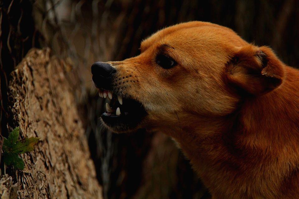 Dog. (File Photo: IANS)