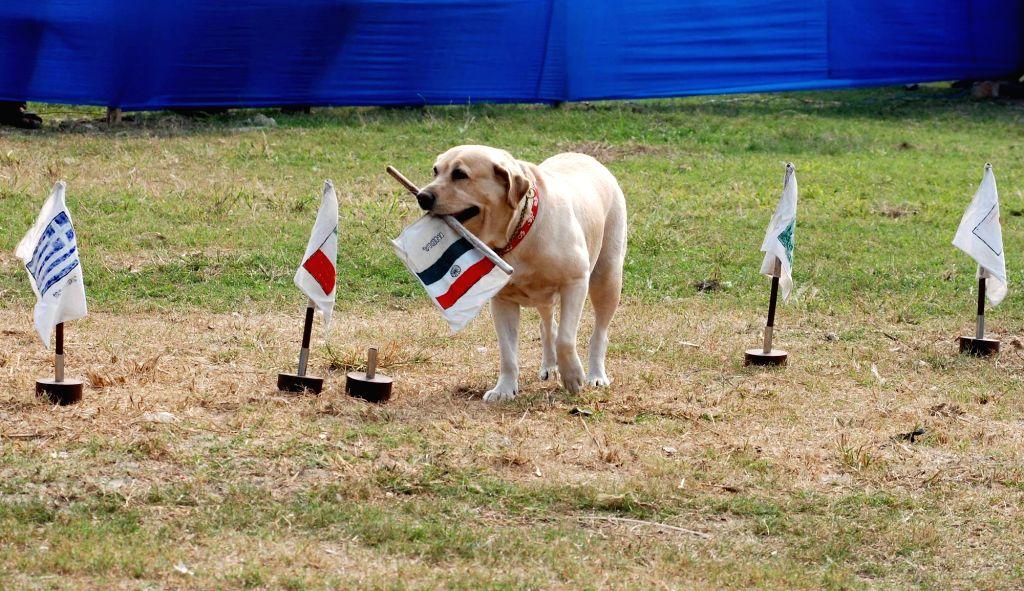 Dog show at Salt Lake organised by Bidhannagar Mela Committee in Kolkata, on Jan 17, 2016.