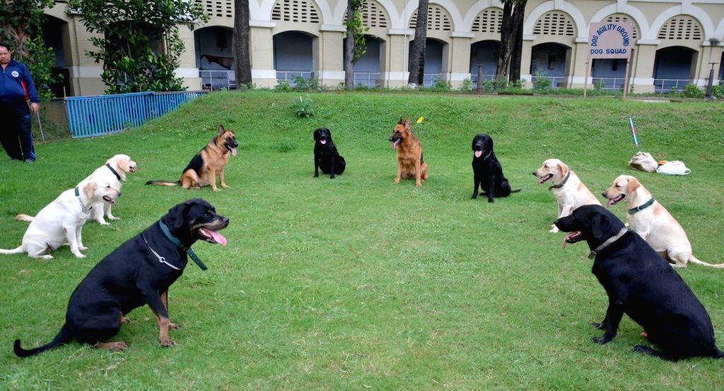 Dog squad of Kolkata Police during a training session in Kolkata on 29, 2017.