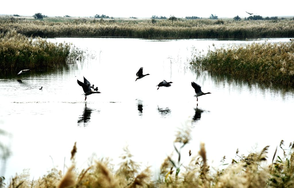 DONGYING, Oct. 18, 2019 - Birds rest at the Yellow River national nature reserve in east China's Shandong Province, Oct. 17, 2019.