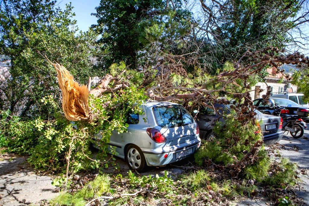 DUBROVNIK (CROATIA), Feb. 23, 2019 Photo taken on Feb. 23, 2019 shows a car covered by toppled trees after strong wind in Dubrovnik, Croatia. Strong winds have swept across much of the ...