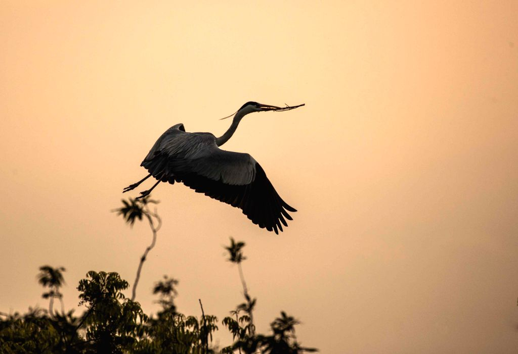 An egret flies beside the Sushanxie Lake in Duchang County, east China's Jiangxi Province, April 17, 2014.
