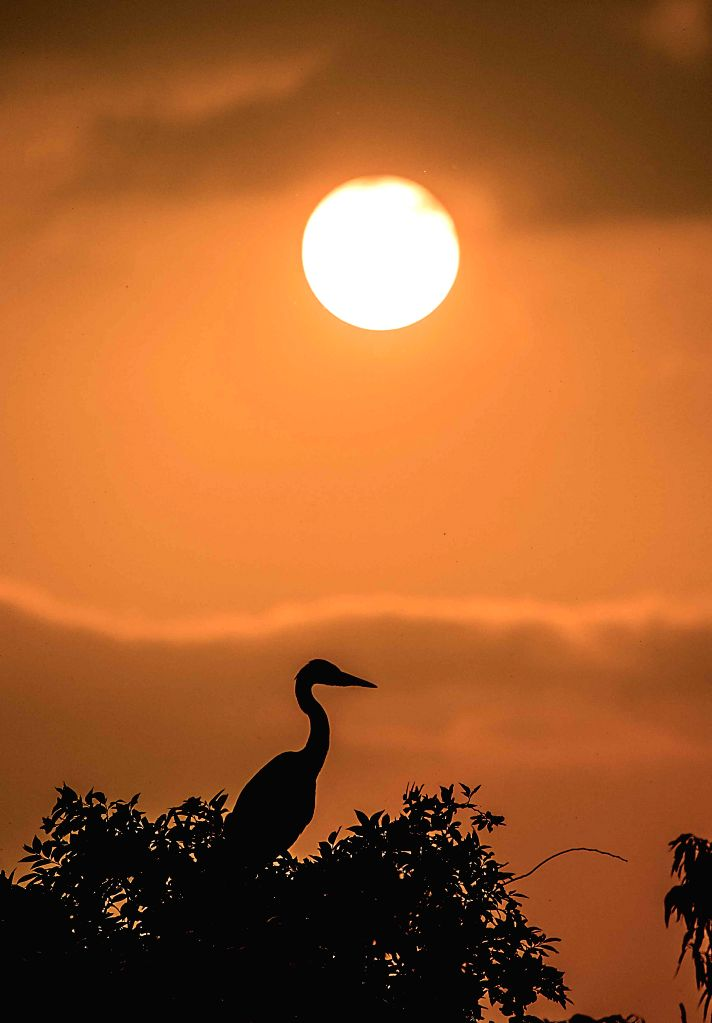 An egret is seen against the setting sun beside the Sushanxie Lake in Duchang County, east China's Jiangxi Province, April 17, 2014.