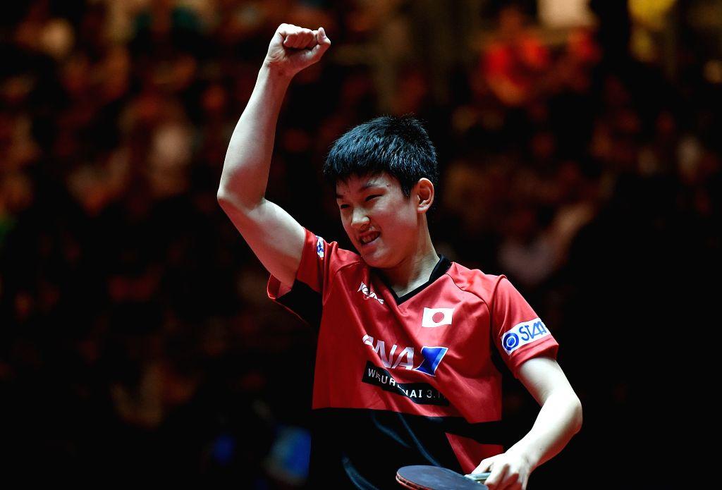 DUSSELDORF, June 1, 2017 - Harimoto Tomokazu of Japan celebrates during the men's singles match against his compatriot Mizutani Jun at the 2017 World Table Tennis Championships in Dusseldorf, ...