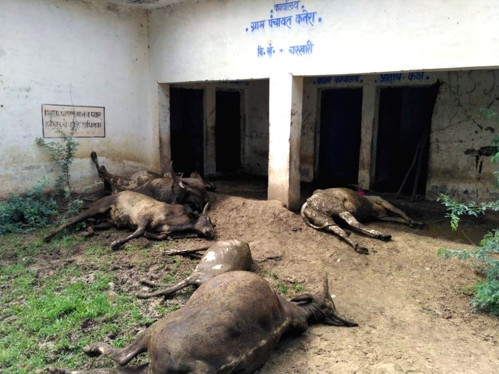 Eight cattle that were kept in a closed room of the Panchayat Bhawan, died due to suffocation in Sudamapuri village of Charkhari Kotwali area of Uttar Pradesh's Mahoba district, on July 26, ...