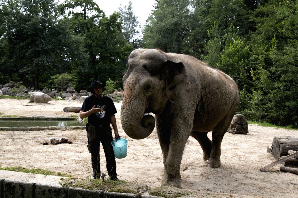 "Elephant ""Ganga"" plays with her keeper at the Ljubljana Zoo in Ljubljana, Slovenia, Aug. 11, 2020. The 45-year-old female Asian elephant ..."