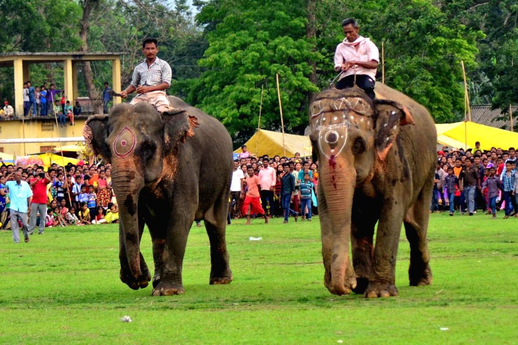 Elephant race underway during the Suwari festival in Boko of Assam on April 19, 2016.