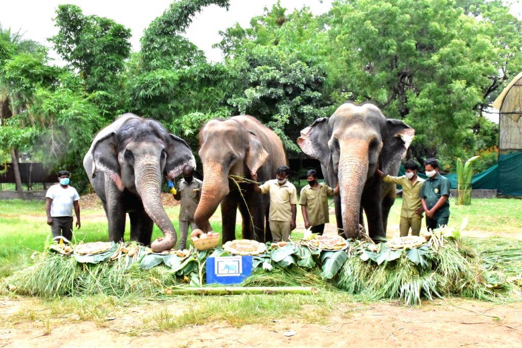 Elephants at Hyderabad Zoo