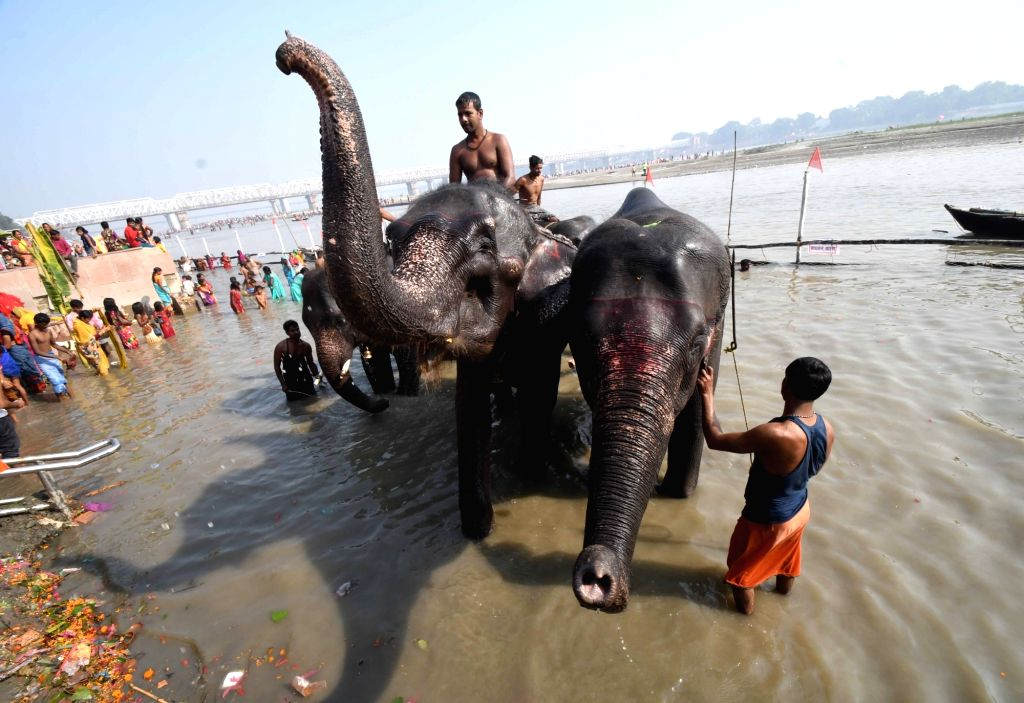 Elephants being given a bath in the Ganga river during Sonepur cattle fair organised on the occasion of 'Ganga Dussehra' and 'Kartik Purnima' in Bihar's Saran district on Nov 12, 2019.