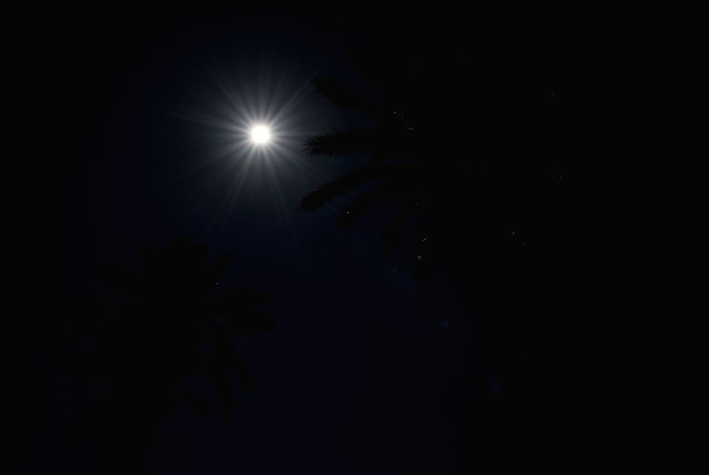 Dates trees are silhouetted against moonlight over the Dead Sea in En Gedi, at  the Mid-Autumn Festival on Sept. 8, 2014. The Mid-Autumn Festival, which falls on ...