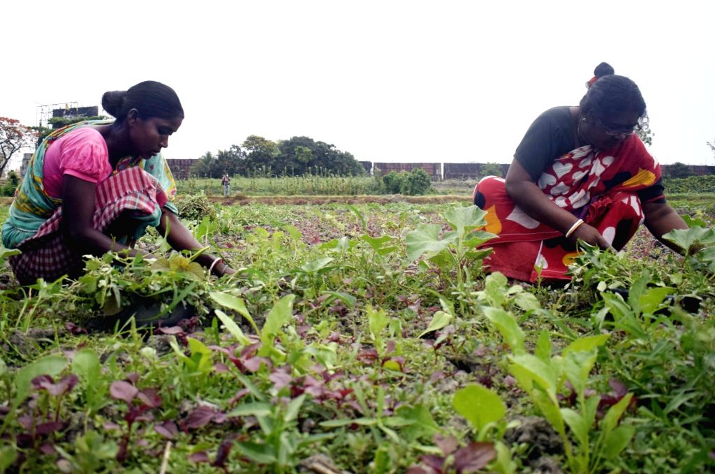 Farmer busy working at her agricultural field in Kolkata during the extended nationwide lockdown imposed to mitigate the spread of coronavirus; on Apr 26, 2020.