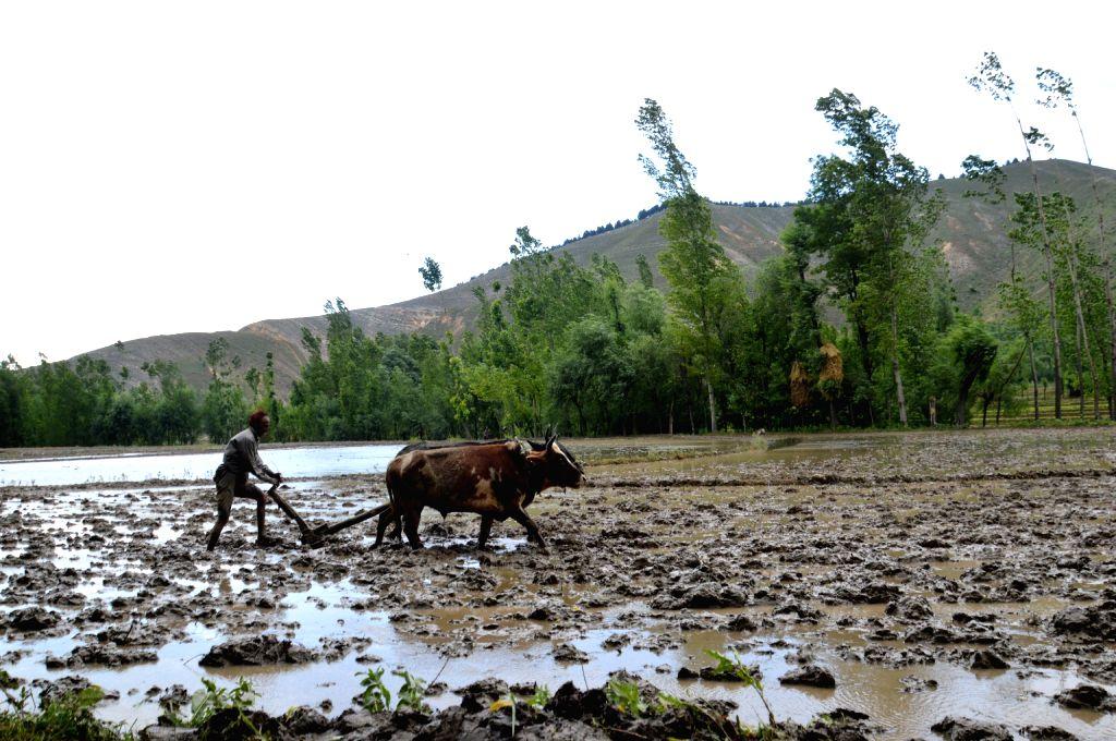 Farmer tills his land. (Photo: IANS)