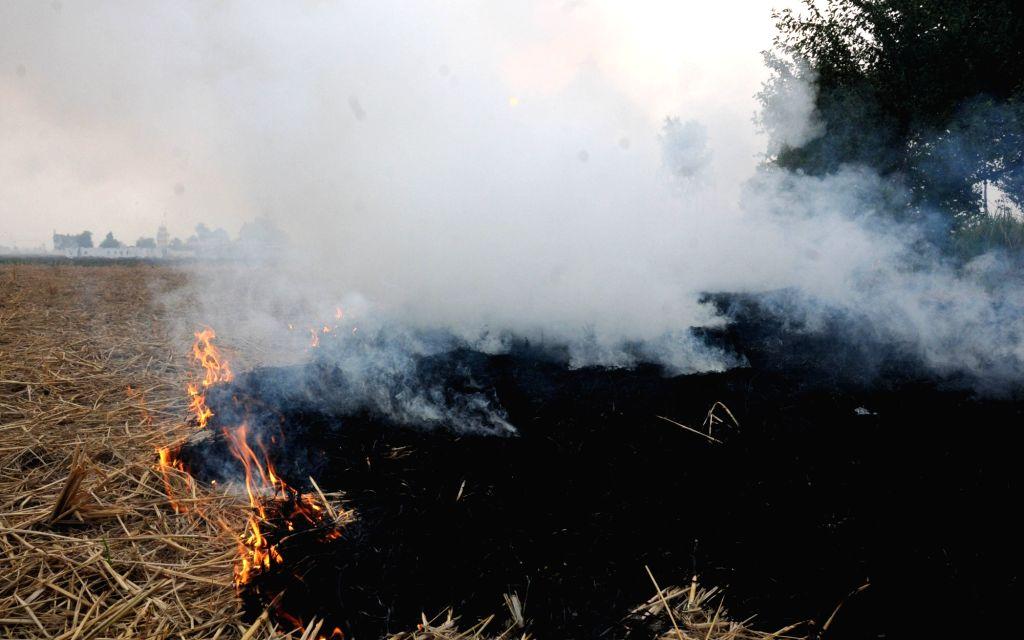 Farmers burn paddy stubble in a village near Amritsar on Nov 2, 2015.
