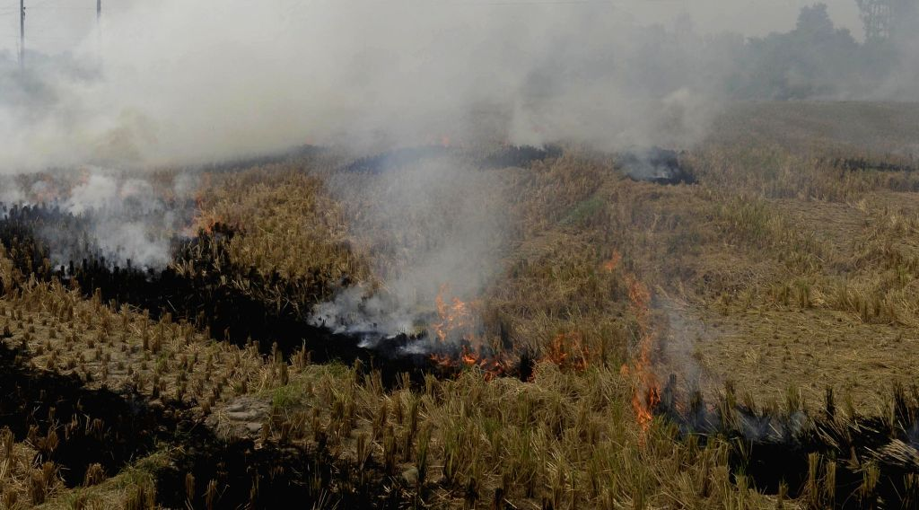 Farmers burn straw stubble in their fields on the outskirt of Amritsar on Oct 24, 2016.