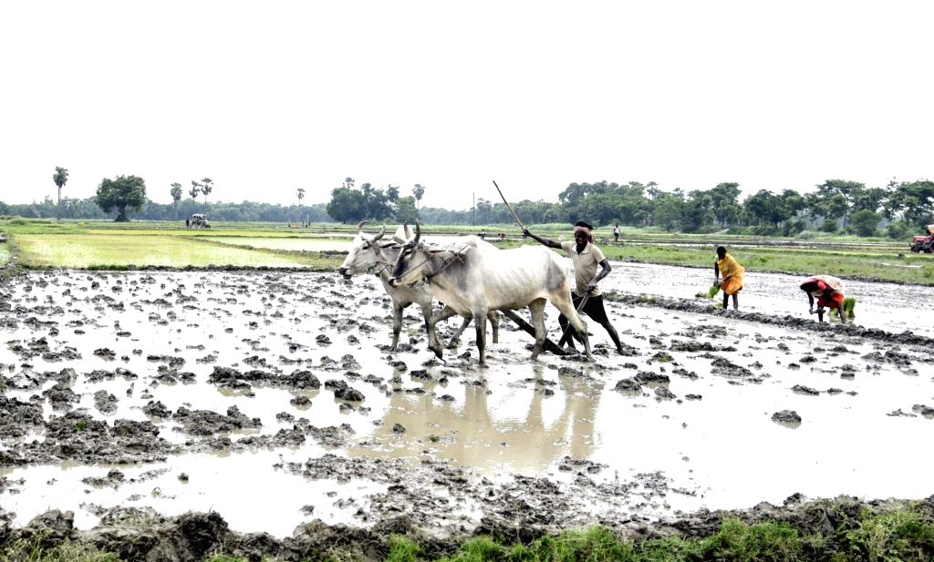 Farmers busy working at their agricultural field in Patna on July 9, 2020.