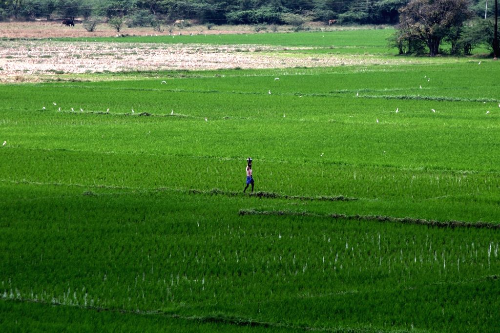 Farmers busy working at their fields on the outskirts of Chennai during the extended nationwide lockdown imposed to mitigate the spread of coronavirus; on Apr 22, 2020.