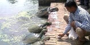 Feeding turtles and below is the turtle pond.