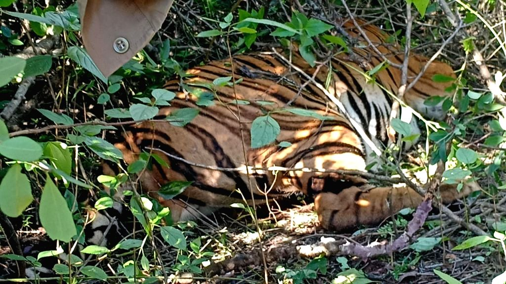 FIR lodged in tiger death case in Pilibhit.