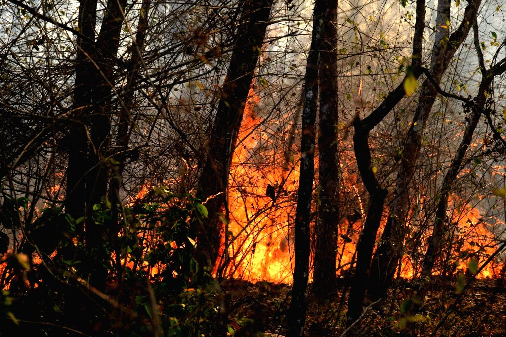 Fire at Bandipur Tiger Reserve in Karnataka on Feb 24, 2019. Unlike in the past or in many years, this is the first time the wildfire in Bandipur flared up earlier due to the sudden ...
