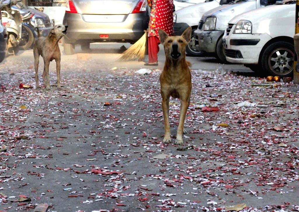 Firecracker litter cover Delhi streets a day after Diwali on Oct 31, 2016.