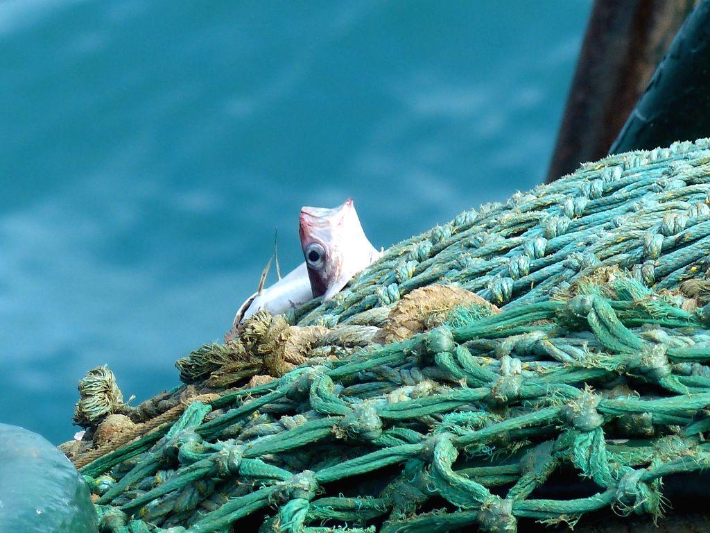 Fishing net. (File Photo: IANS)