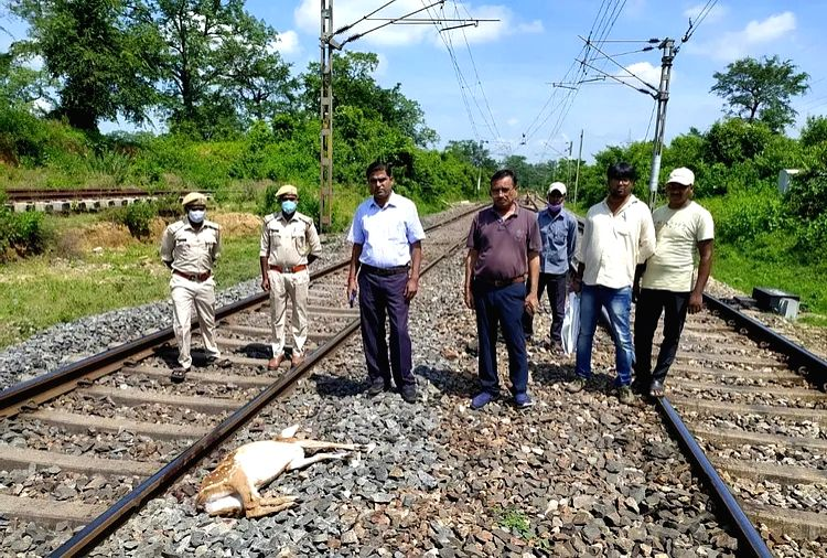 Five deer mow down by goods trains photo from Ranchi
