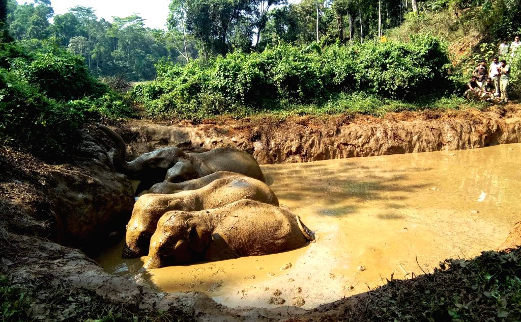 Forest Department officials rescued five wild elephants, which were stuck in slushy farm pond in Palangala village near Virajpet, of Kodagu district, Karnataka on April 10, 2019.