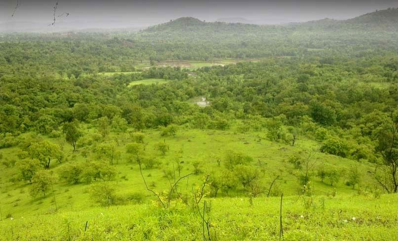 Forests of Tillari in Maharashtra's Sindhudurg.