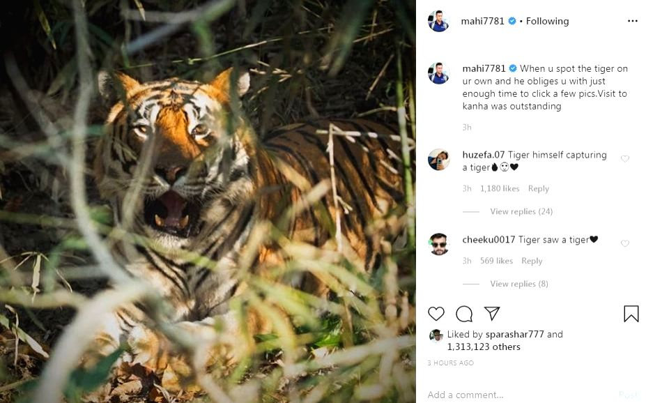 """Former India captain MS Dhoni on Friday posted an image of a tiger that he said he had spotted at the Kanha Tiger Reserve in Madhya Pradesh. Dhoni captioned the picture """"When you spot the tiger on your own and he obliges you with just enough time t - MS Dhoni"""