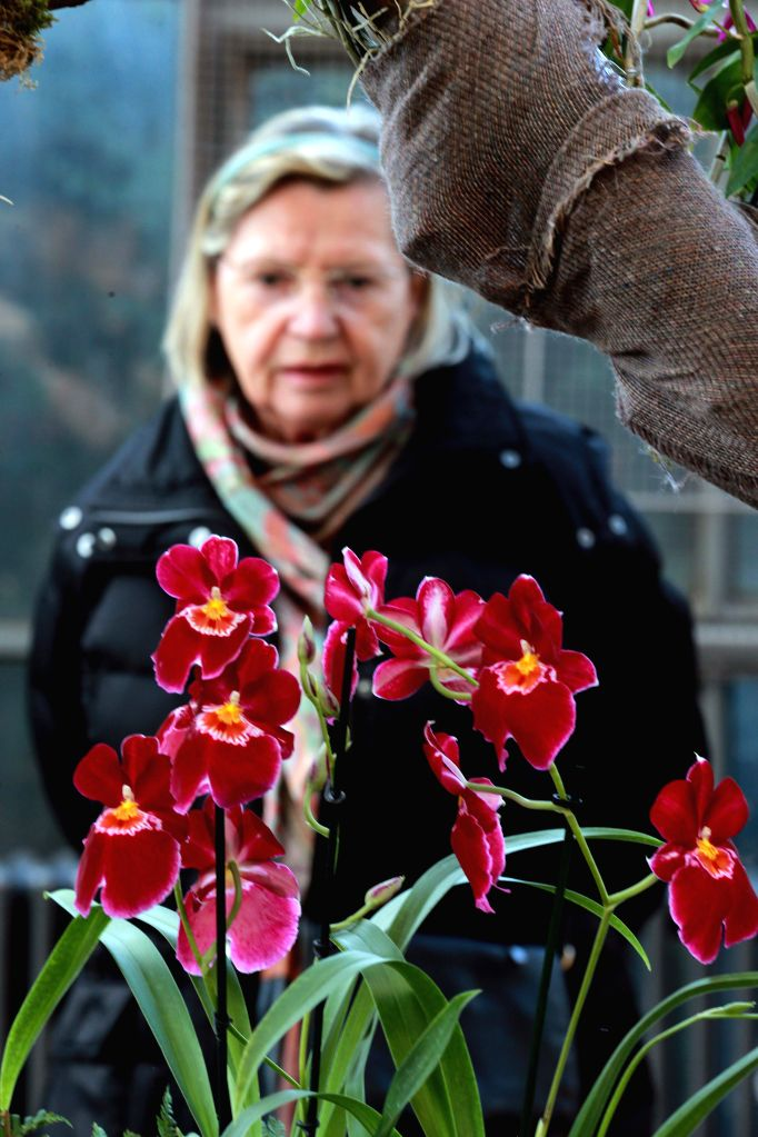 "FRANKFURT, March 11, 2017 - A woman visits the flower exhibition ""Orchids"" at the Palm Garden in Frankfurt, Germany, on March 10, 2017. The exhibition was opened on Friday and will last to ..."