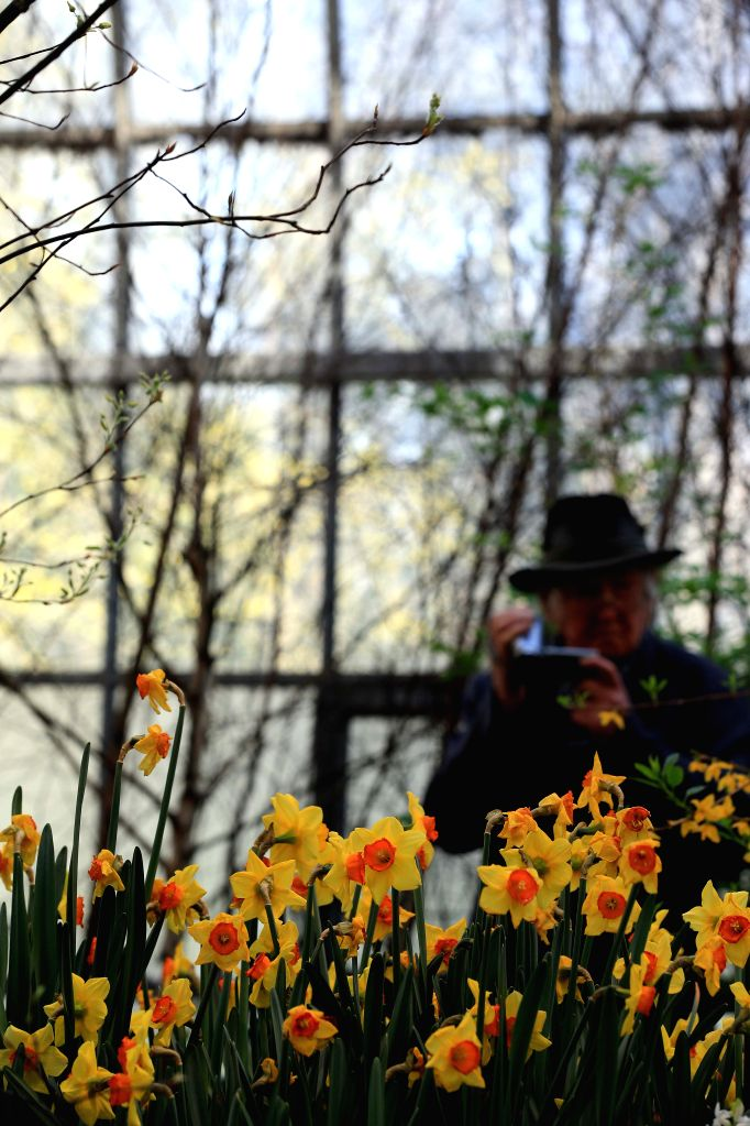 "FRANKFURT, March 6, 2017 - A visitor takes pictures during the flower exhibition ""Springtime"" at the Palm Garden in Frankfurt, Germany, on March 5, 2017. The exhibition was held from Feb. ..."