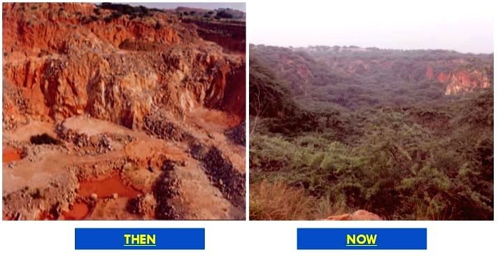 Freed of illegal miners, Asola Bhati Sanctuary is green again.
