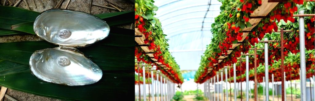 From strawberries to pearls: UP farmers expand horizon