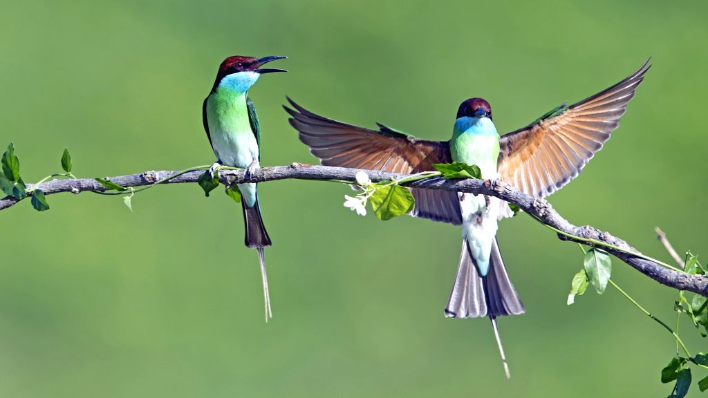 FUZHOU, June 17, 2019 - Two blue-throated bee eaters are seen at Xiexi Village in Luxia Town of Nanping City, southeast China's Fujian Province, June 15, 2019.