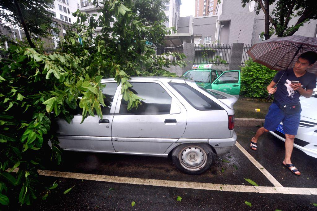 FUZHOU, Sept. 28, 2016 - A broken tree is seen in typhoon-hit Fuzhou, capital of southeast China's Fujian Province, Sept. 28, 2016. Typhoon Megi, the 17th typhoon this year, made landfall in Hui'an ...