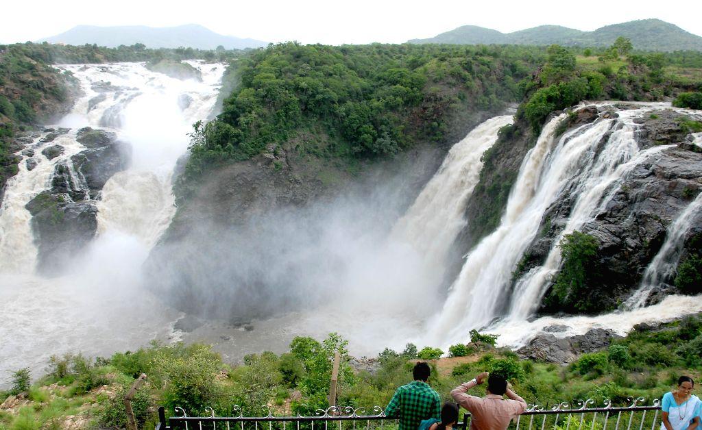 Gaganachukki waterfall regains its glory during rainy season in Malavalli Taluk in Mandya district in Mandya district, Karnataka on July 24, 2014.