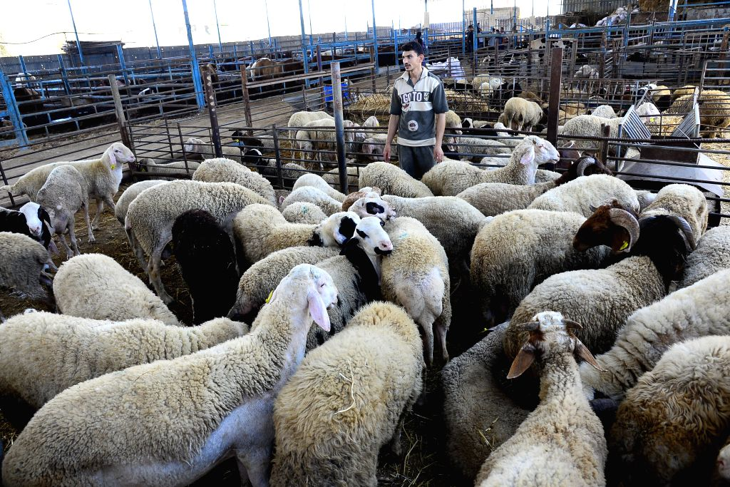 GAZA, Aug. 8, 2019 - A Palestinian worker is seen at a livestock market ahead of the Muslim festival Eid al-Adha, in Gaza City, Aug. 6, 2019. Muslims in the Gaza Strip are preparing to celebrate Eid ...