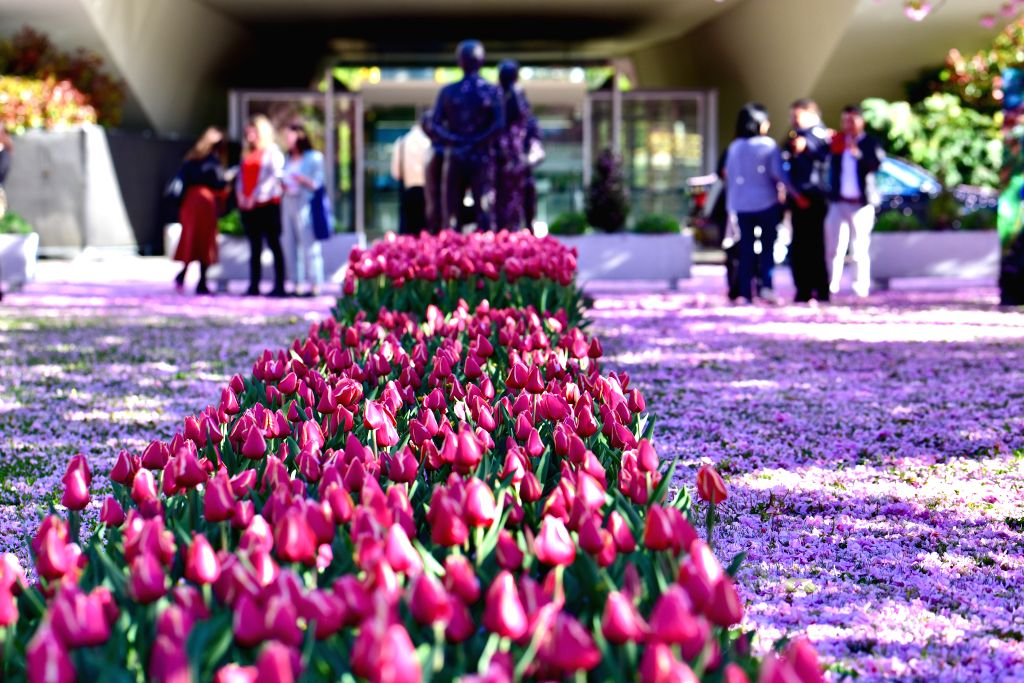 """GENEVA, April 25, 2019 - Photo taken on April 24, 2019 shows a """"flower blanket"""" in front of the headquarters of World Health Organization (WHO) after a sudden rain in Geneva, Switzerland."""