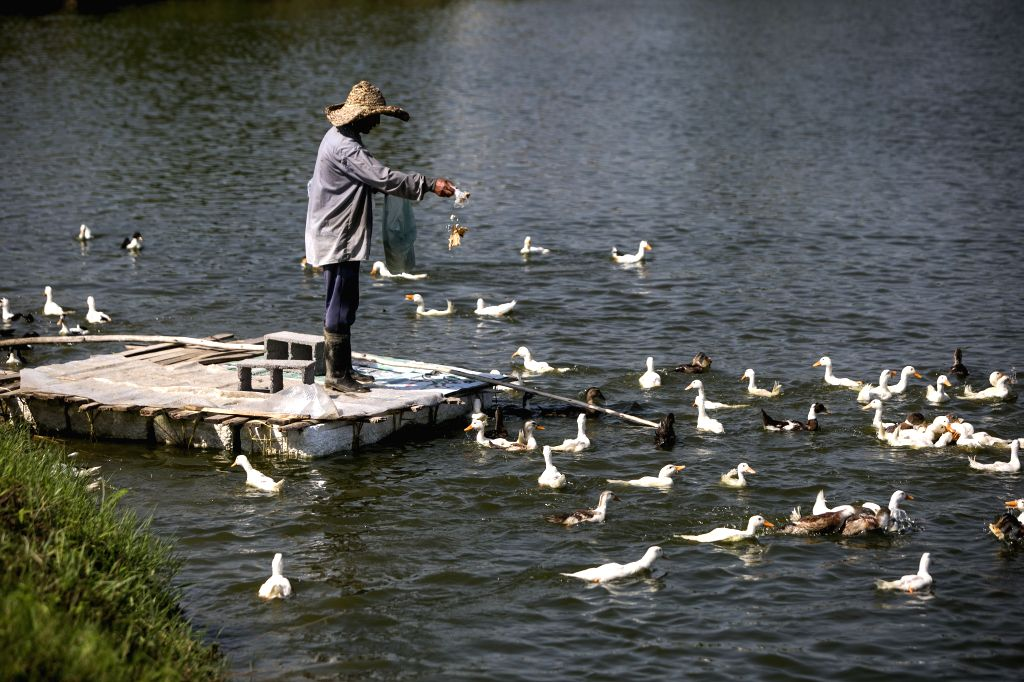 GILAN PROVINCE, Aug. 6, 2019 - A man feeds ducks on a pond in Gilan province, northern Iran, on Aug. 5, 2019.