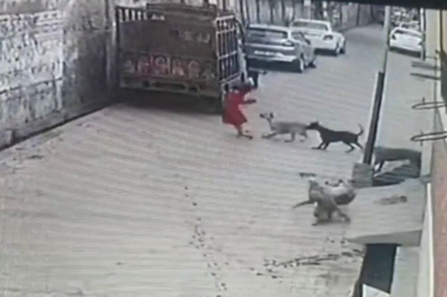 Girl attacked by dogs in UP.