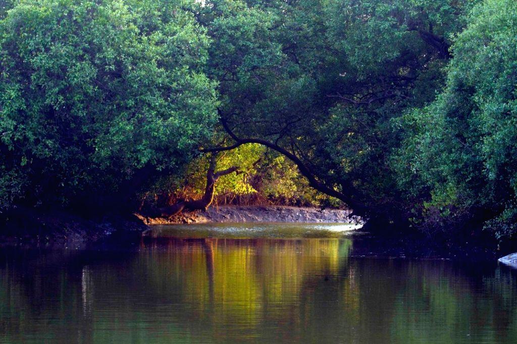 Goa forest CJI
