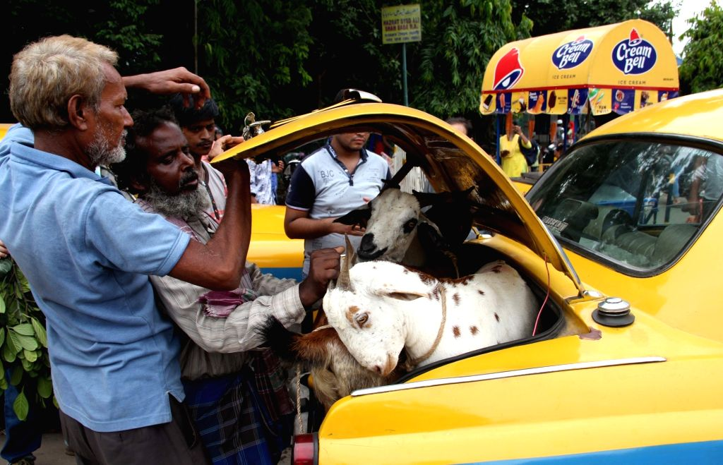 Goats being adjusted into the trunk of a buyer's car as people prepare to celebrate Eid-Ul-Zuha, in Kolkata on Aug 10, 2019.