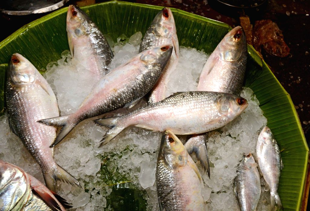 Good news for Bengal food lovers. A huge consignment of their favourite silvery delight 'Hilsa' arrived in Kolkata's adjoining Howrah wholesale fish market from neighbouring Bangladesh., on ... - The Sheikh Hasina