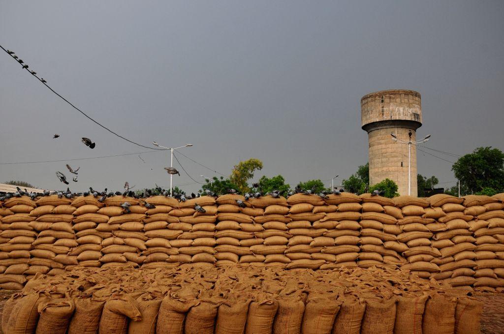 grain market. (Photo: IANS)