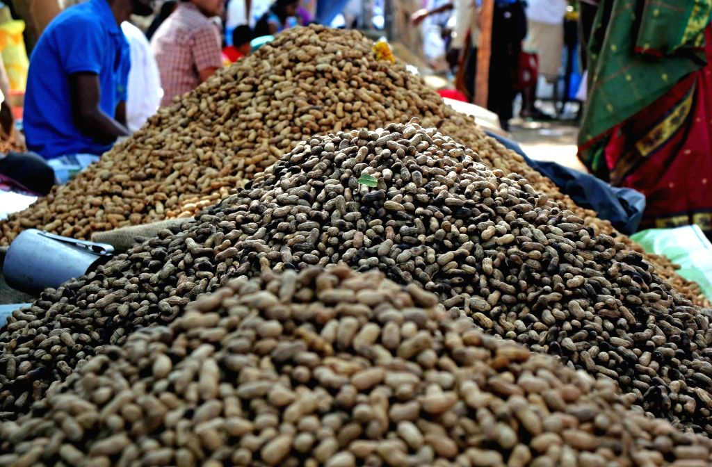 Groundnuts being sold during Kadalekai Parishe - annual groundnut fair at Bull Temple in Bengaluru's Basavanagudi on Dec 3, 2018.