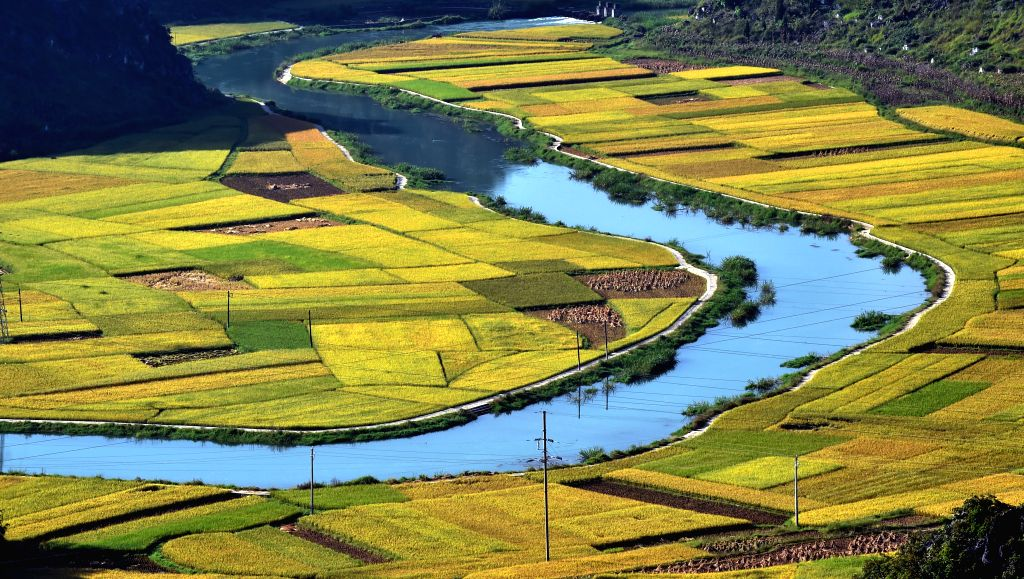 A river runs through the rice fields at Babao Township in Guangnan County, southwest China's Yunnan Province, Sept. 8, 2014.