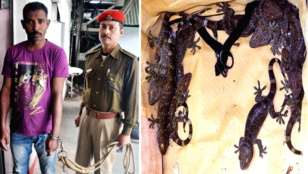 (A Combo Picture) Sanjay Rai, who was arrested from a passenger train at the Guwahati railway station for trying to for trying to smuggle 15 gecko lizards on Jan 19, 2015. - Sanjay Rai