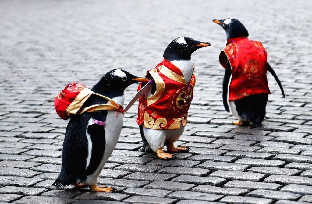 HARBIN, Feb. 10, 2018 - Penguins in Tang Suit from Harbin Polarland walk on the Harbin Central Street, northeast China's Heilongjiang Province, Feb. 10, 2018.