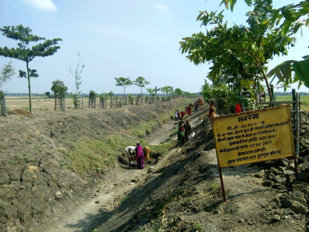 Harpur Bochanan Panchayat in Bihar's Samastipur is famous for its greenery.