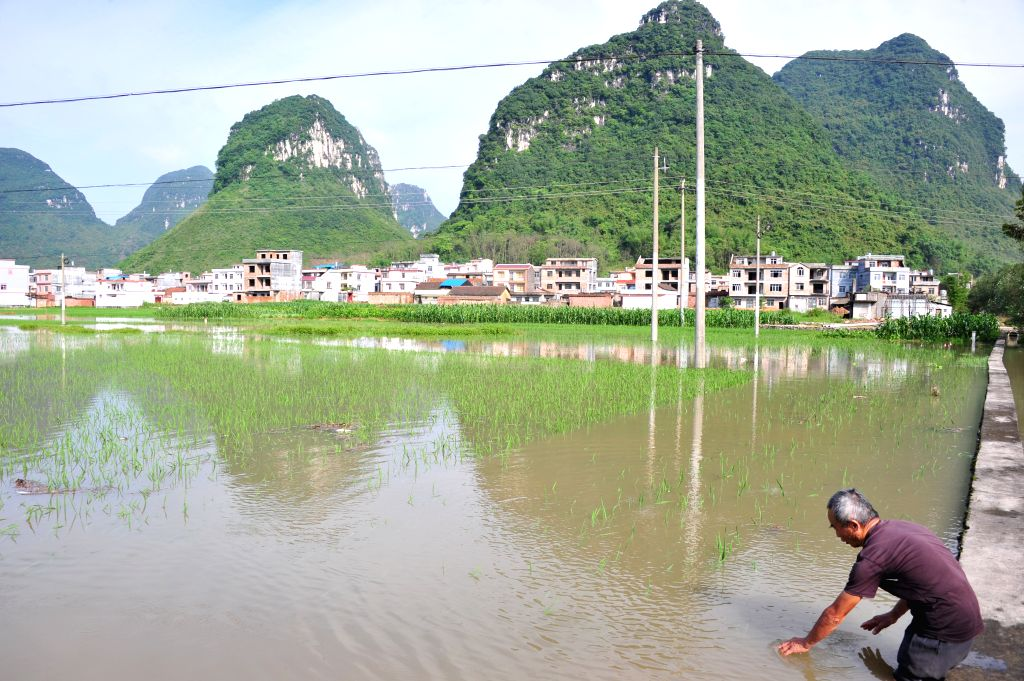 HECHI, May 20, 2016 - A villager checks his inundated farmland in Luocheng County, south China's Guangxi Zhuang Autonomous Region, May 20, 2016. A flood alert was issued in Guangxi on Friday as heavy ...